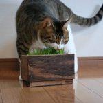 無印良品の猫草栽培キットのホルダーを作りました